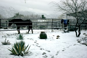 A horse walks in the snow in Catalina, Ariz., in the winter. Photograph by Susan E. Swanberg.